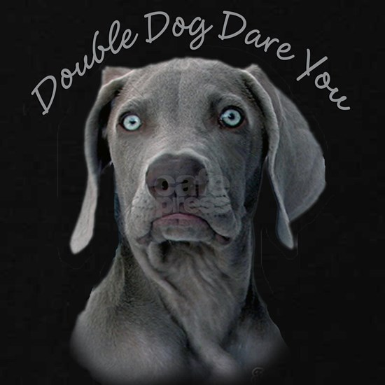 Weimaraner Double Dog Dare