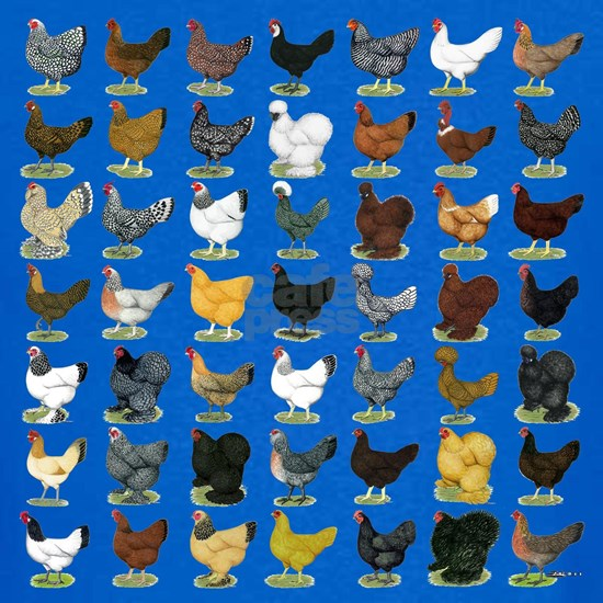 49 Hen Breeds