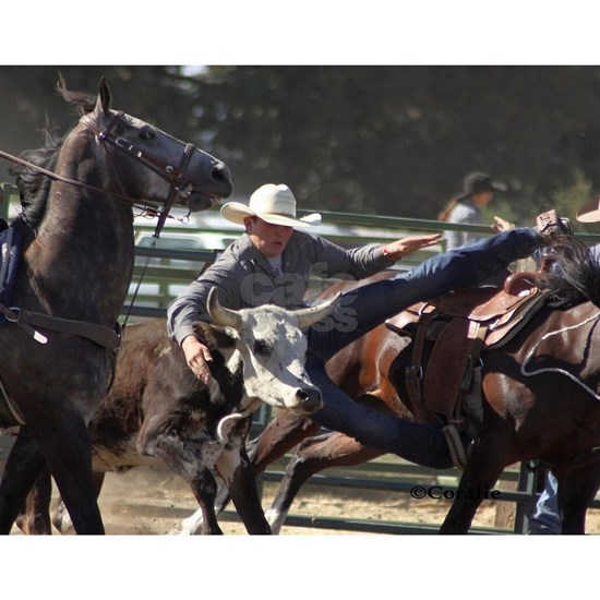 Bulldogging Steer Wrestling Rodeo Action