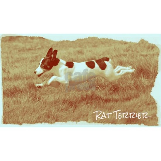 Flying Rat Terrier