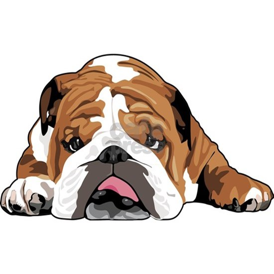 Teddy the English Bulldog