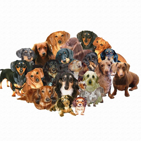 A World of Dachshunds