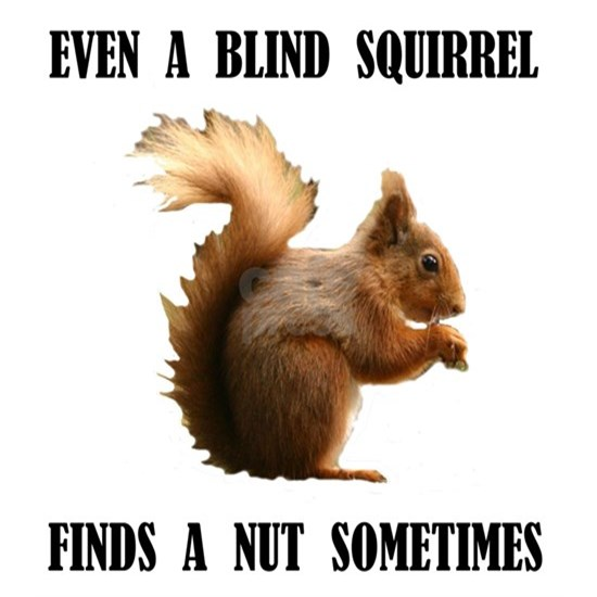 BLIND SQUIRREL