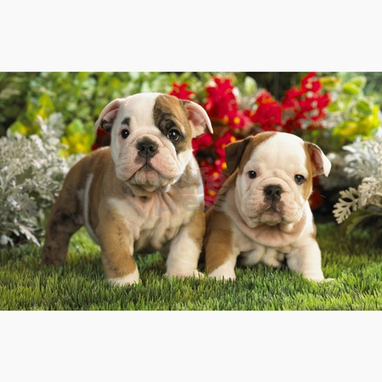 cute_bulldog_puppies_wide_wallpaper