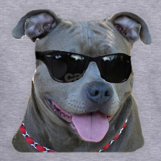 Pitbull in sunglasses