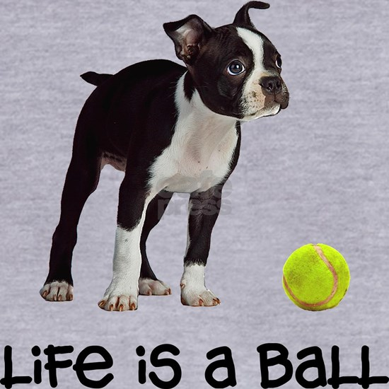 Boston Terrier Life