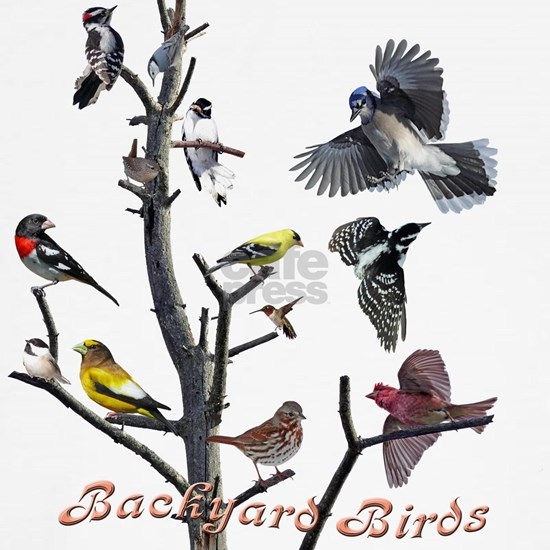 backyard birds 12 X T