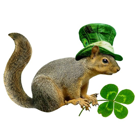 Leprechaun Squirrel