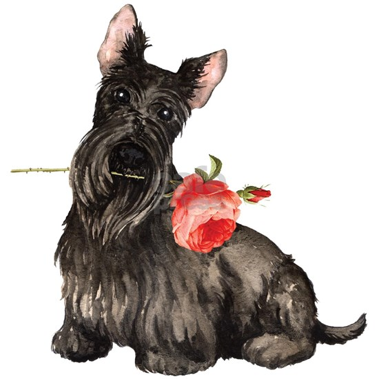 Scottish Terrier Rose