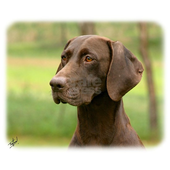 German Shorthaired Pointer 9Y163D-135