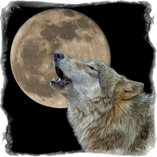 howl 8x8 - frame