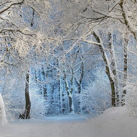 Another Winter Wonderland