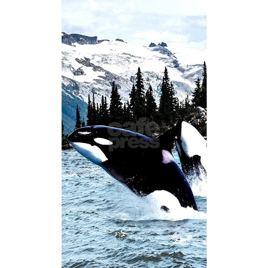 Leaping Killer Whales