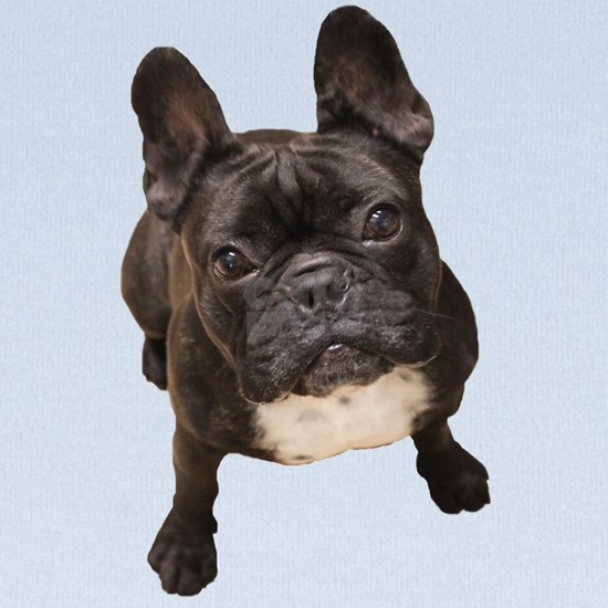 Classic French Bulldog