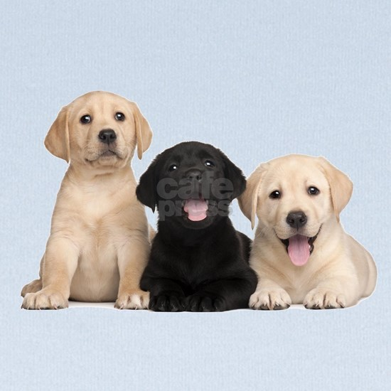 3 Lab Puppies