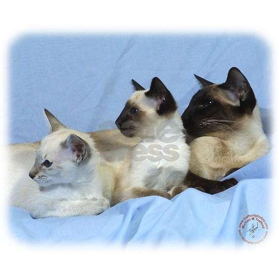Siamese Cat 9W055D-074