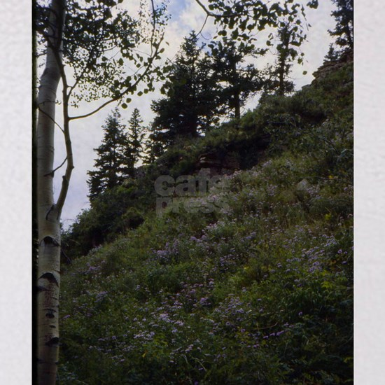 San Juan Mtn Trail Columbine