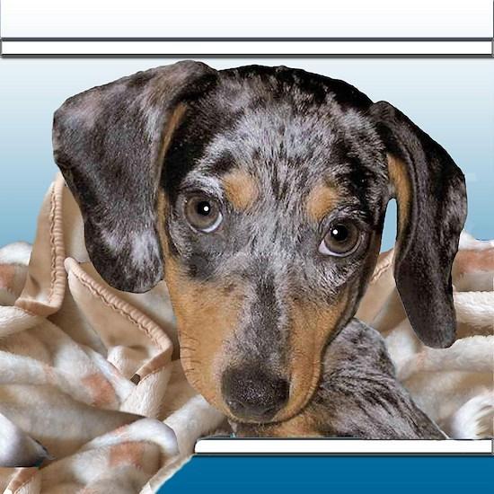 speckled dachshund dog