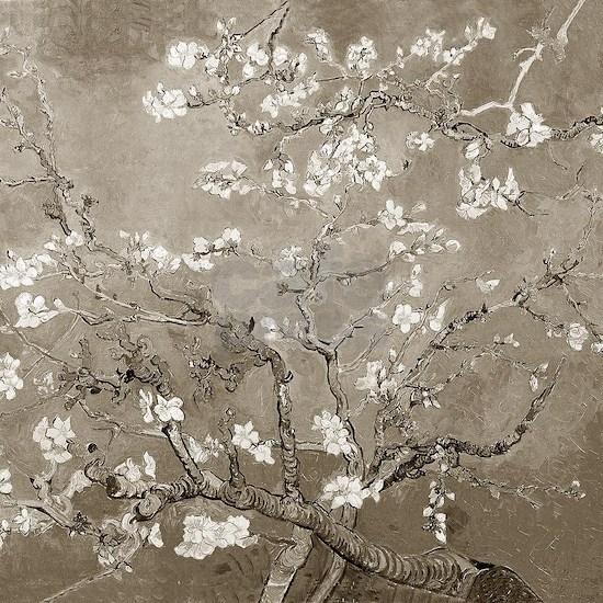 Almond Branches Sepia