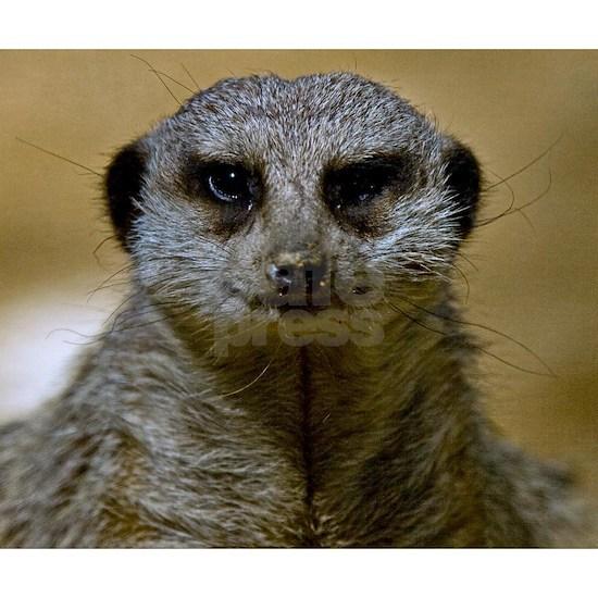 (15) Meerkat  9247
