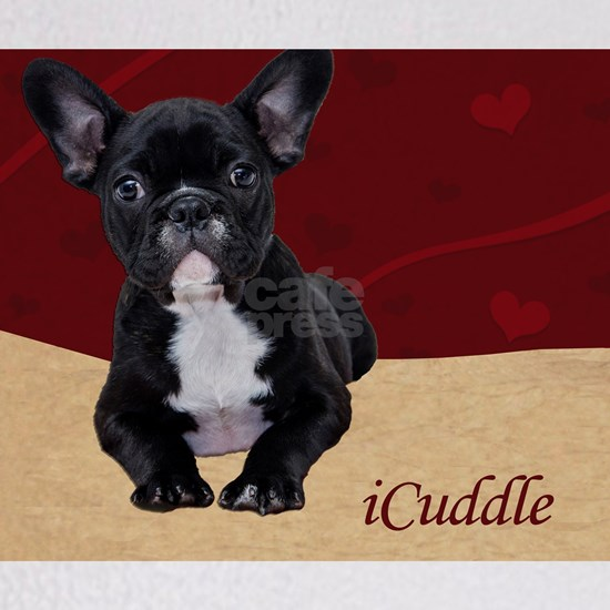 Adorable iCuddle French Bulldog Puppy