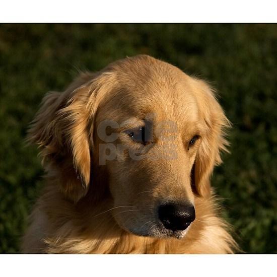 (14) golden retriever head shot