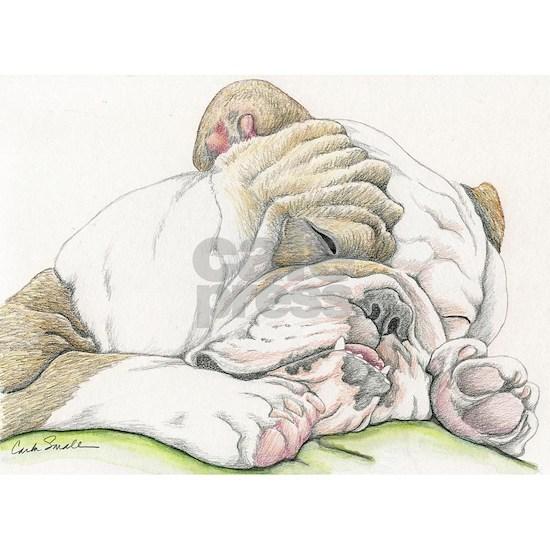 Sleepy English Bulldog