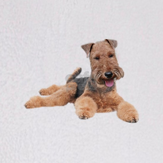 Welsh Terrier Portrait