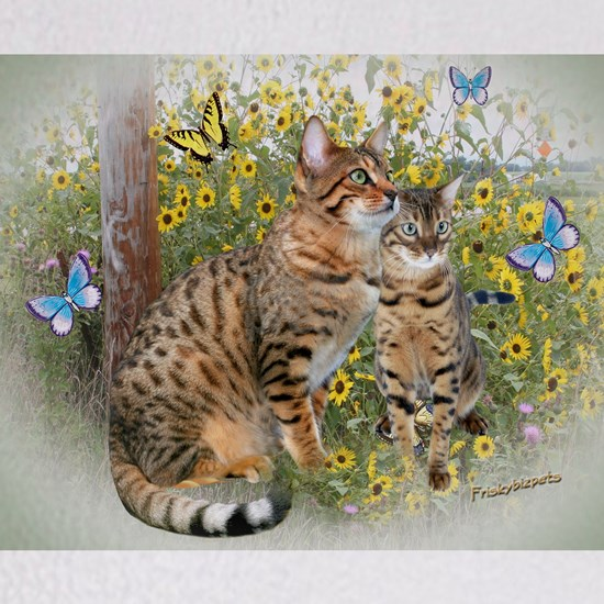 Bengal cats and butterflies