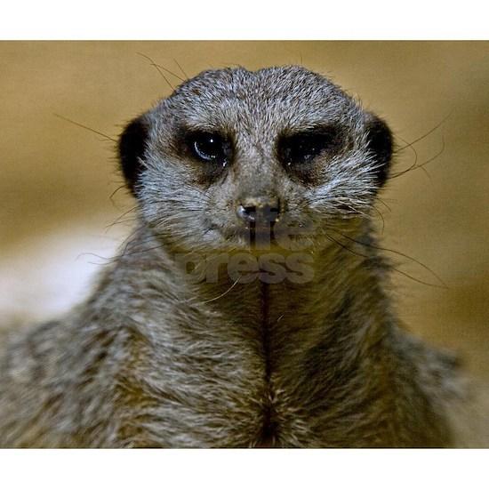 (4) Meerkat  9247