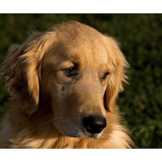 (2) golden retriever head shot