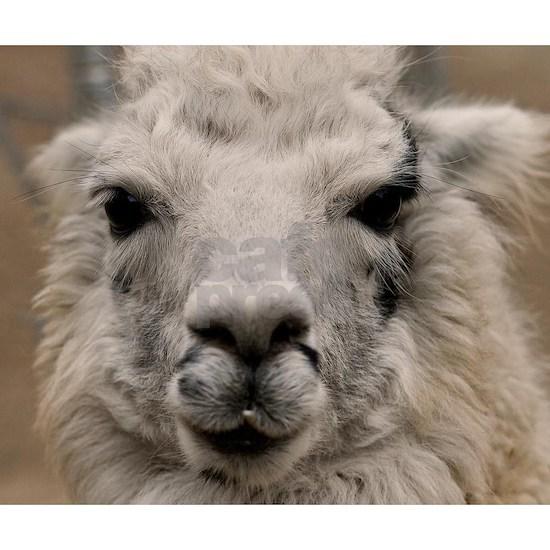 (19) Llama 8716