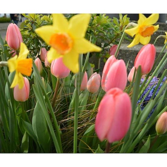 Pretty spring pink tulip, yellow daffodil flowers