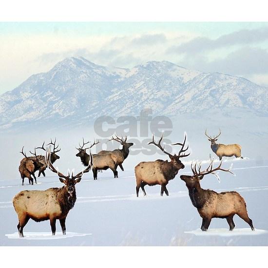 Northern bull elk
