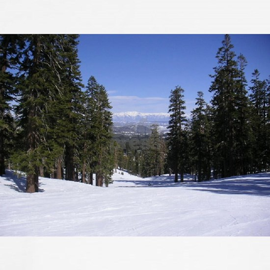 Mammoth Mountain, Blue Sky, White Snow, Tall Trees