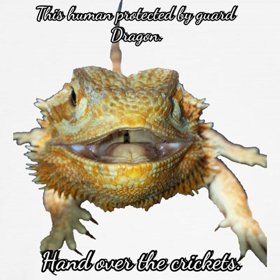 guard dragon crickets