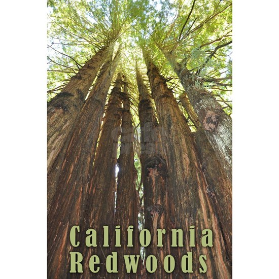California Redwoods