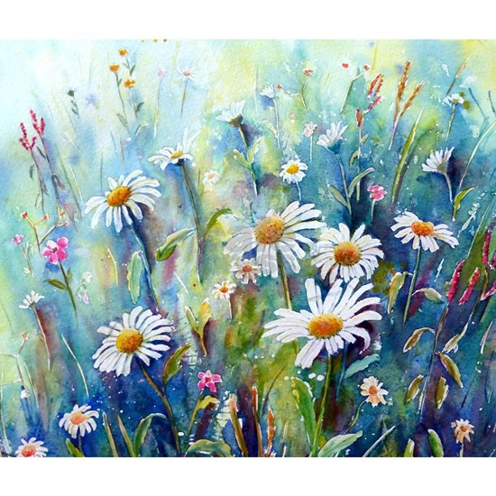 Watercolor painting daisy field