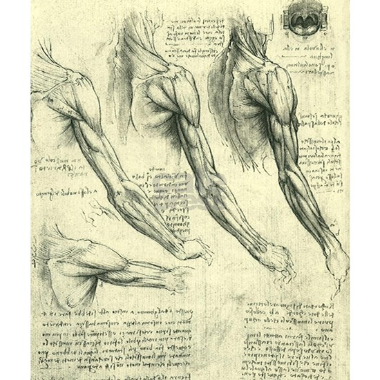 Male Anatomy by Leonardo da Vinci
