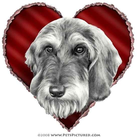 Wire-haired dachshund-heart