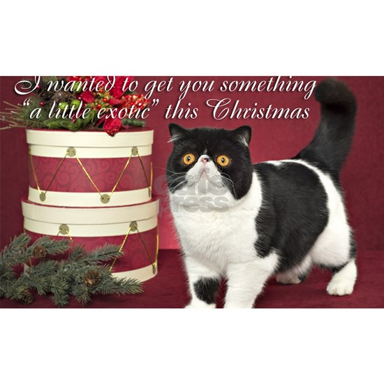 Exotic Shorthair Cat Christmas Card