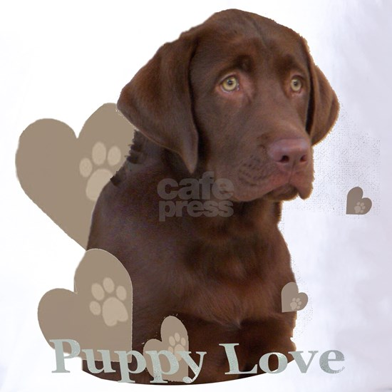 Chocolate Lab Puppy portrait