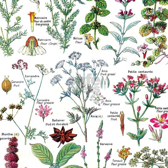 Botanical Illustrations - Larousse Plants