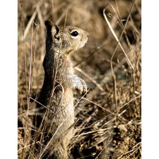 10x10 Cute Squirrel