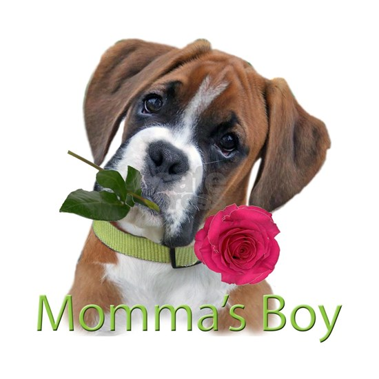 Boxer Momma's Boy