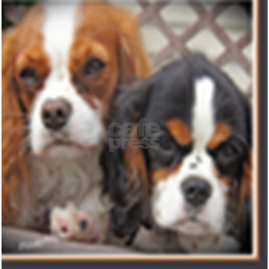 Cavalier King Charles Friends