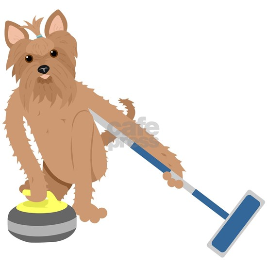 Yorkshire Terrier Curling