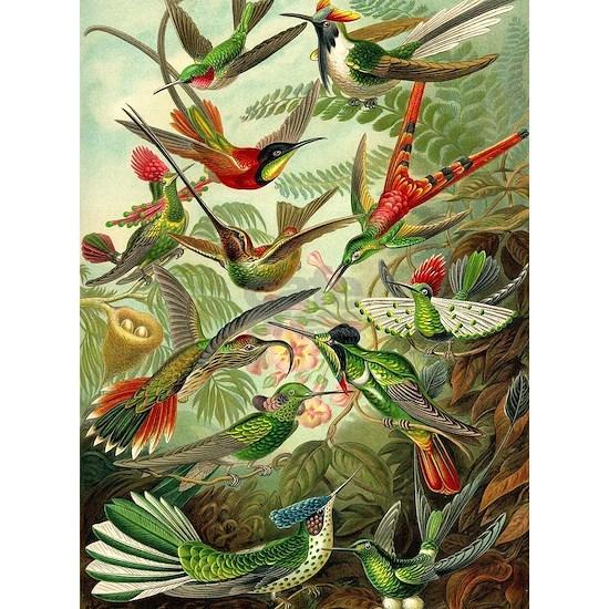 Vintage Hummingbirds Decorative