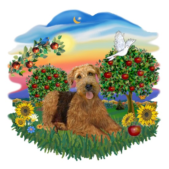 Bright Country - Airedale 5