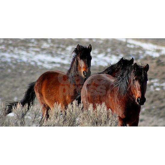 Free wild horses